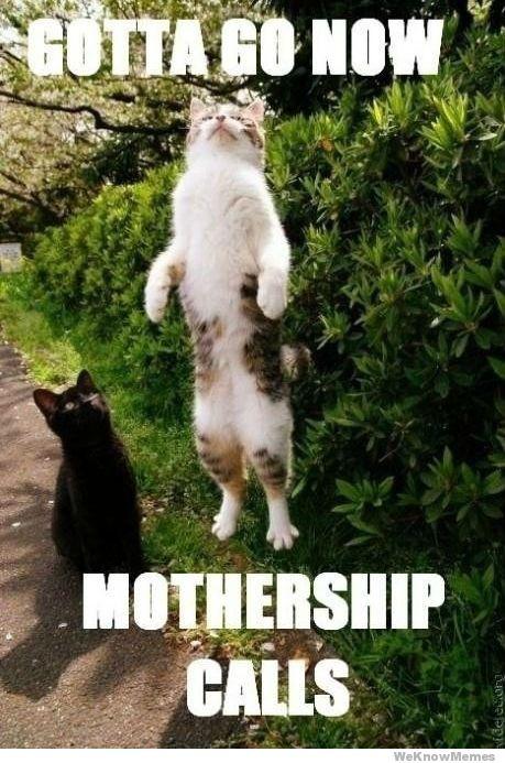 Gotta-go-now-mothership-calls